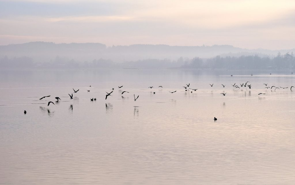 Birds over lake
